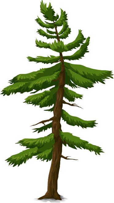 tree_coniferous_2